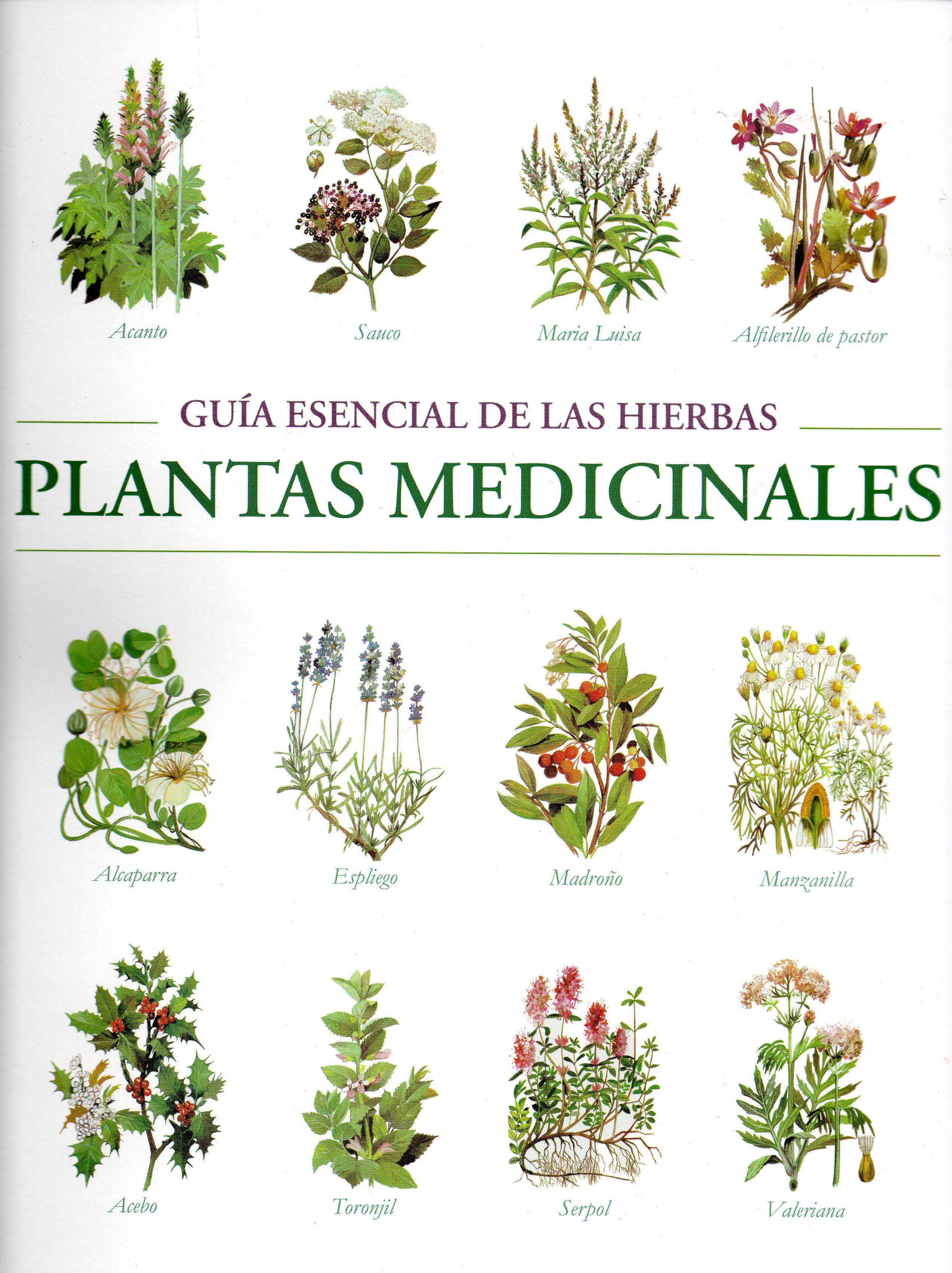 (PE) GUIA ESENCIAL DE LAS HIERBAS. PLANTAS MEDICINALES ...